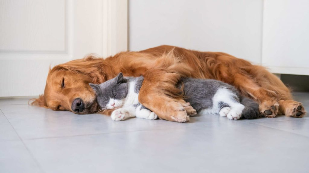 Selling a house with pets? Read these 4 top tips first